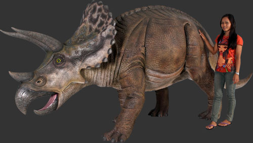 Triceratops 5ft.