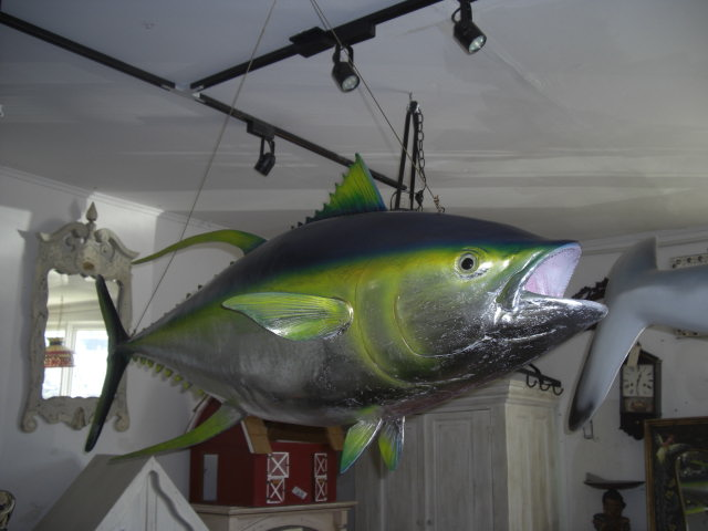 Yellow-fin Tuna / Fiberglass
