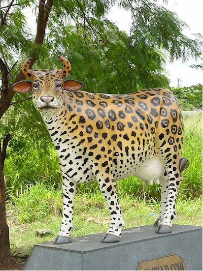 Cheetah Cow